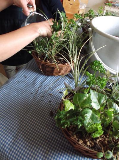 草花教室 かご寄せ植え