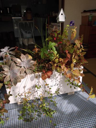 草花教室かご寄せ植え2