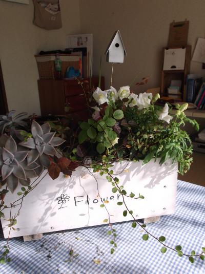 草花教室かご寄せ植え3
