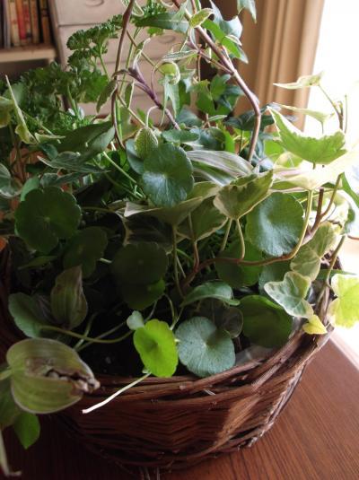 草花教室かご寄せ植え5