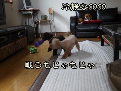 P1050736.jpg