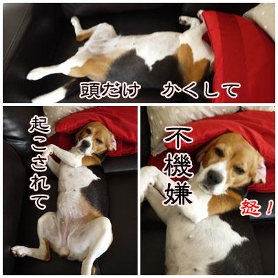 cats_20120718112712.jpg