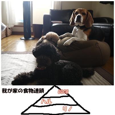 cats_20121016083520.jpg