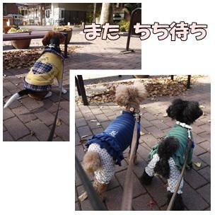 cats_20121211120022.jpg