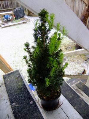 evergreen_convert_20130116041437.jpg