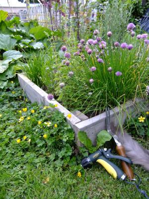 gardening+tools_convert_20120612132059.jpg