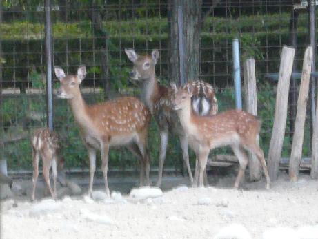 20120825鹿