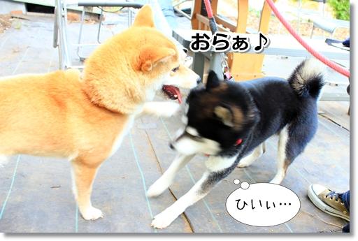 10_20120510022113.jpg