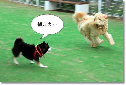 10_20120521014659.jpg