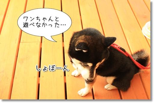 10_20120612131343.jpg