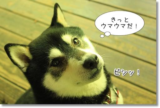 10_20120624133756.jpg