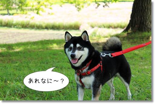 10_20121014112629.jpg