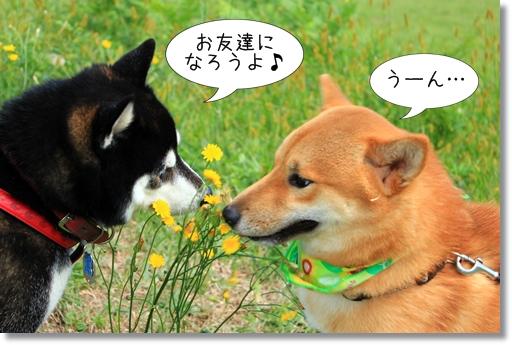 10_20121019031635.jpg