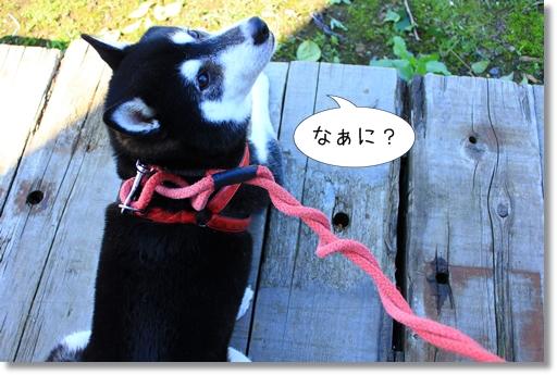 10_20121023053154.jpg