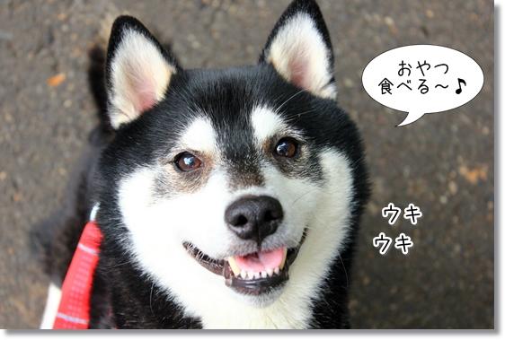 10_20121212171234.jpg