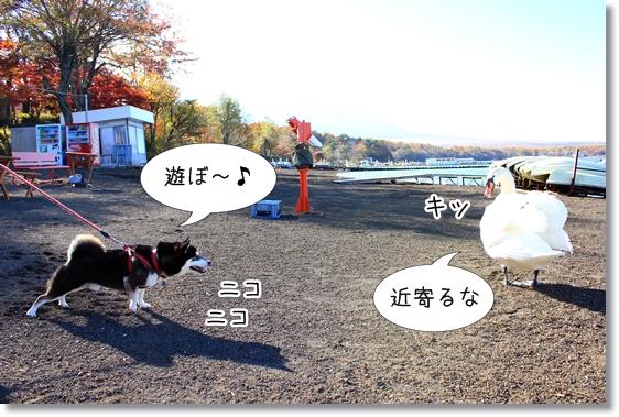 10_20121227074046.jpg