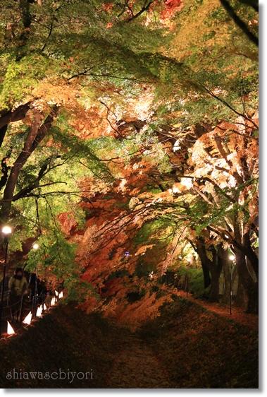 10_20121230101710.jpg