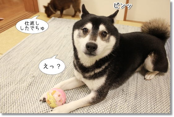 10_20130226051636.jpg
