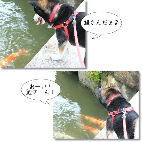 11_20120705130718.jpg