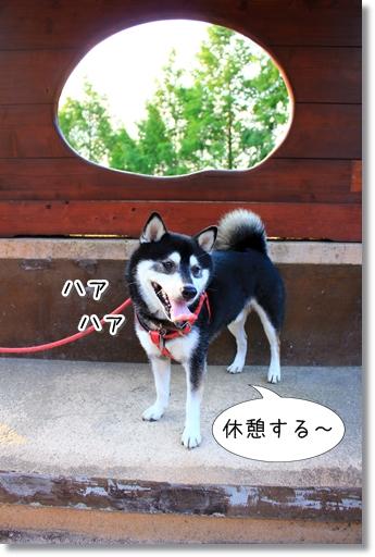 11_20120726102537.jpg