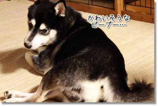 11_20120818014901.jpg