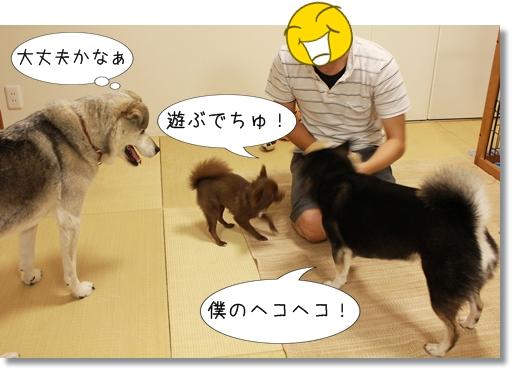 11_20120830104407.jpg
