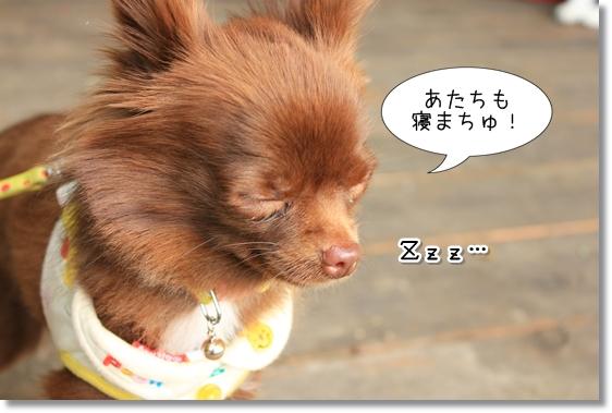 11_20121211055009.jpg