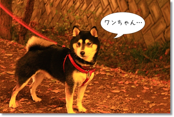 11_20121230101710.jpg