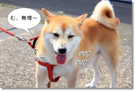 12_20120516152857.jpg