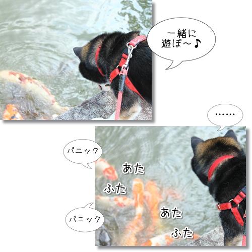 12_20120705130718.jpg