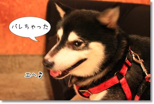 12_20120812165334.jpg