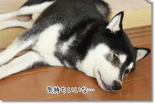 12_20120822132345.jpg