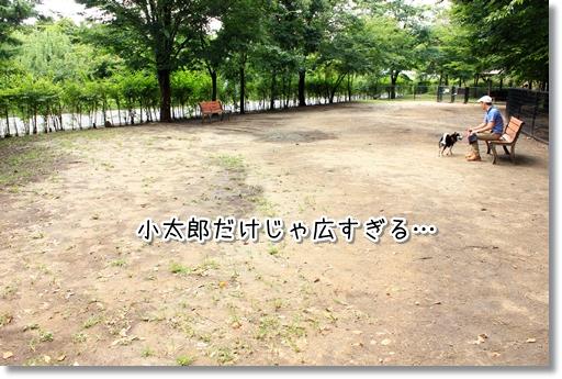 12_20121010044818.jpg