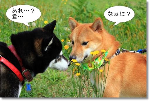 12_20121019031635.jpg