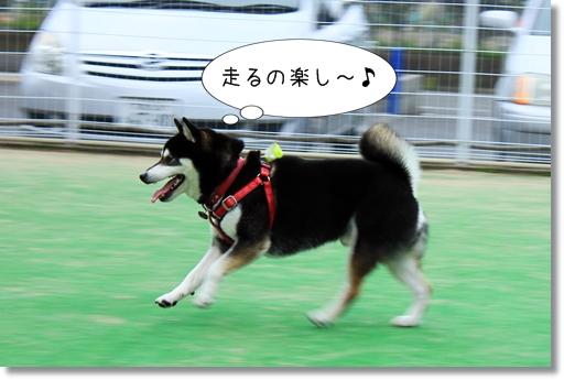 13_20120602023131.jpg