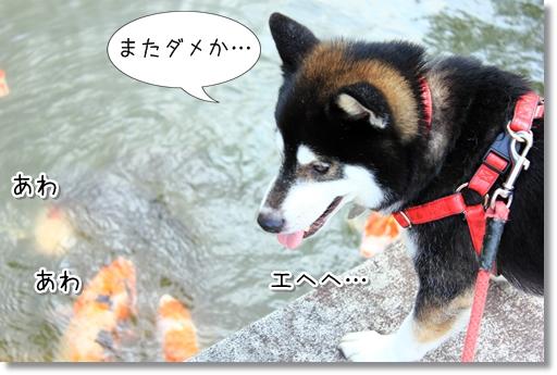 13_20120705132157.jpg