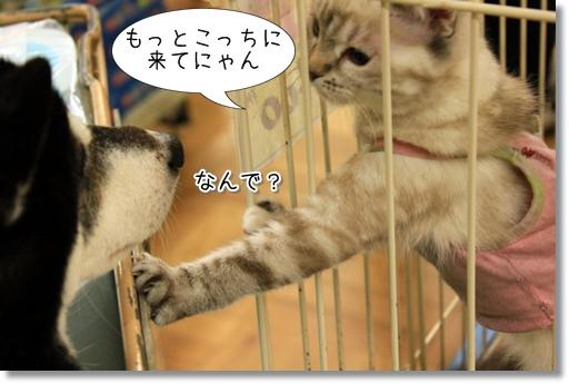 13_20120727181734.jpg