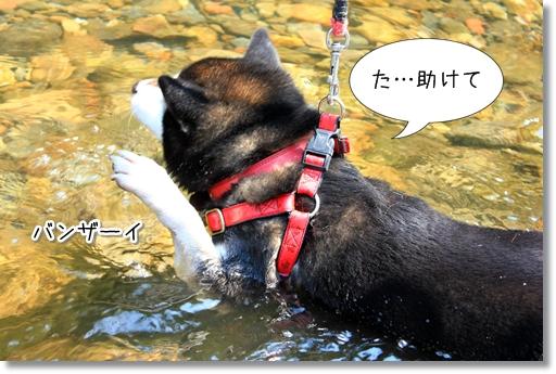 13_20120801124724.jpg