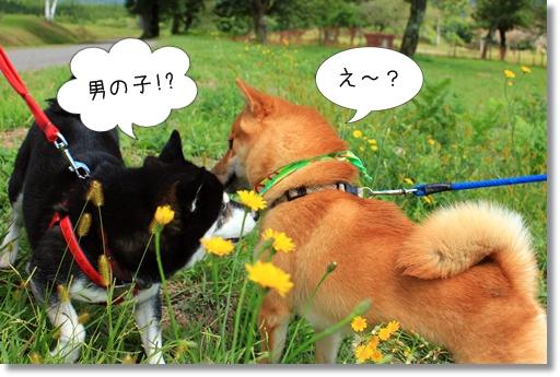 13_20121019032248.jpg