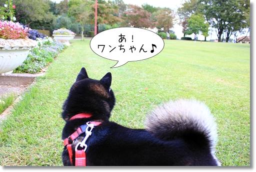 13_20121029140713.jpg