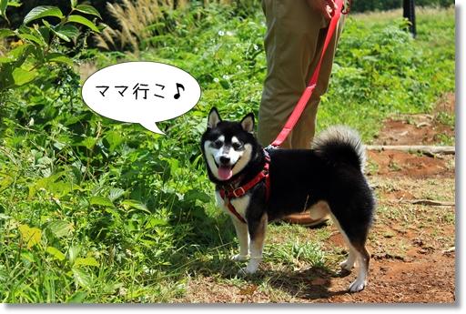 14_20121012020305.jpg