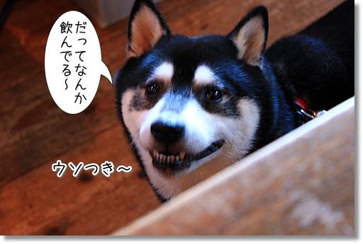 14_20121017181146.jpg