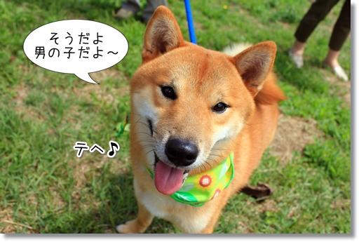 14_20121019032248.jpg
