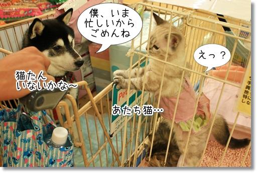 15_20120727181733.jpg