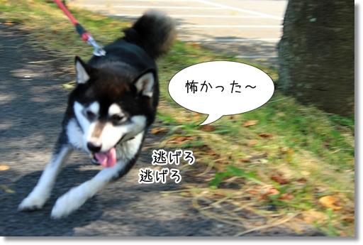 15_20120801124724.jpg