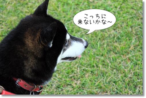15_20121029140713.jpg