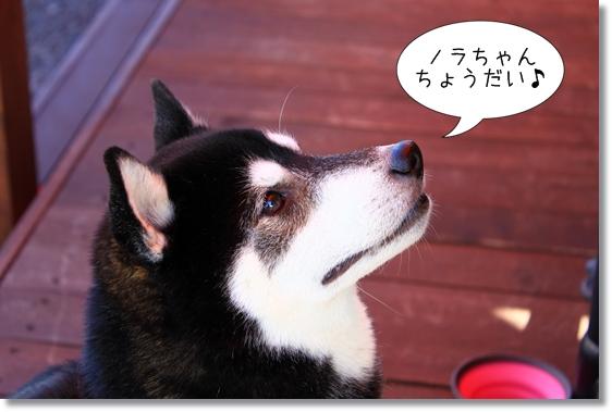 15_20121121155214.jpg
