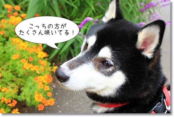 15_20121212173020.jpg