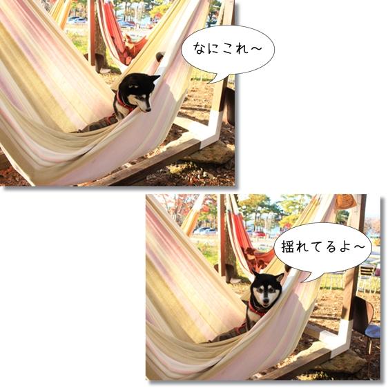 15_20121228135316.jpg