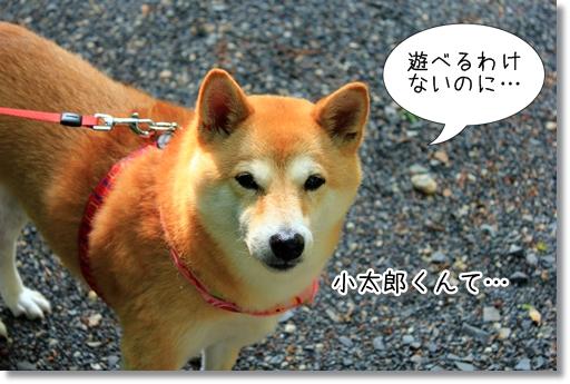 16_20120705132156.jpg